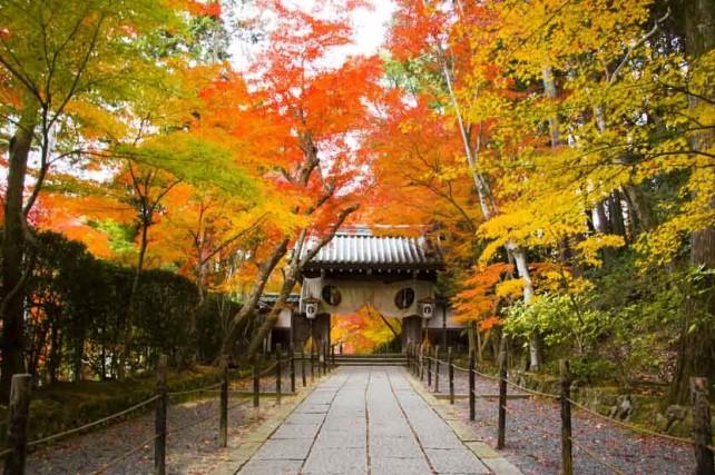 Beautiful Pocket-Sized City: A Profile of Ningbo's Sister City Nagaokakyo, Japan